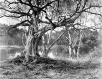 a woodland landscape by robert morley