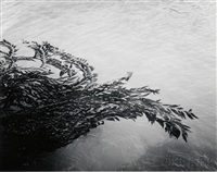 floating kelp, point lobos, california by minor white