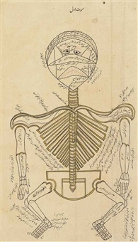 an anatomical drawing by anonymous-iranian (17)