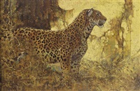 leopard by dennis anderson