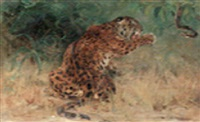 leopard baiting a snake by john macallan swan