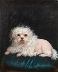 petit chien de lion by léontine lemee