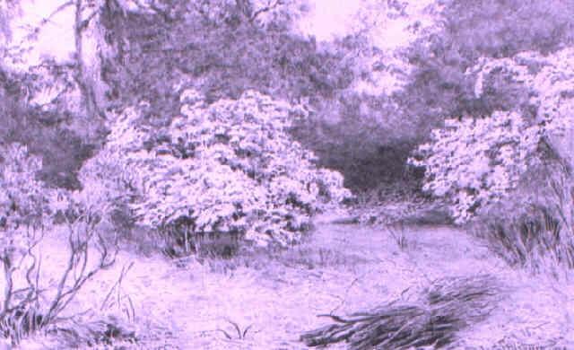 may blossom by wilmot pilsbury