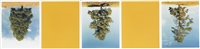 ponderosa pines, princeton b.c., cat hi-way yellow (in 5 parts) by rodney graham