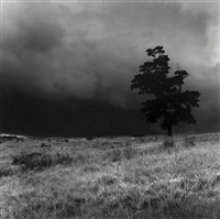 tree with sheep, alcomden, calder valley by fay godwin