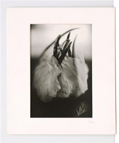 sembraron vientos by cristina kahlo