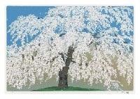 willow cherry blossoms in koishikawa korakuen by chinami nakajima