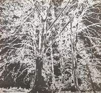 bosco by tano festa