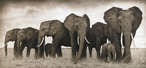elephants resting amboseli 2007 by nick brandt