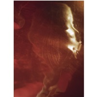 untitled #4 (from portraits of the soul series) by elinor milchan