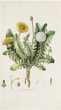 flora londinensis by william curtis