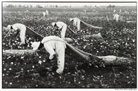 the cotton pickers, texas by danny lyon
