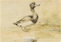 study of a waterfowl by newton (smith limbird) fielding