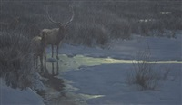 evening light - american elk by robert mclellan bateman