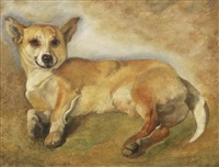 study of a corgi by sir edwin henry landseer