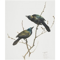 common grackle - quiscalus quiscula (+ 4 others; 5 works) by james fenwick lansdowne
