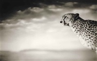 cheetah looking out over plains, masai mara by nick brandt