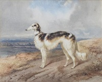 portrait of a borzoi in a landscape by f. heichel