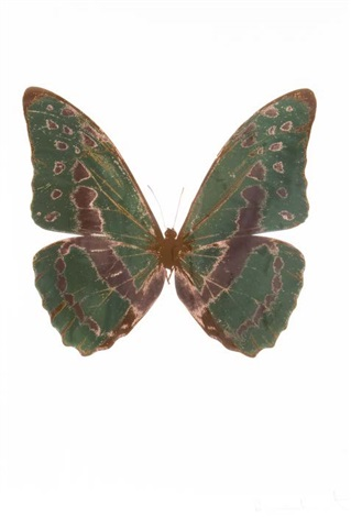 the souls iii leaf green rustic copper by damien hirst
