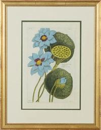 plants (8 works) by pierre bouchoz