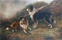 two collies in an open landscape by adrienne lester