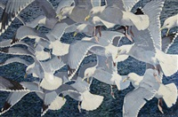 gulls over a shoal by keith shackleton