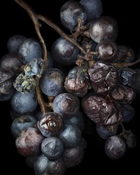 noble rot -9 by peter lippmann