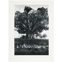 rock-tree by jerry uelsmann