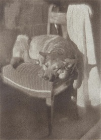 untitled (dog in sunlight on chair) by heinrich kühn