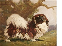 standing pekingese by harry rountree