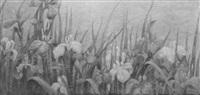 irises by eugenie m. heller