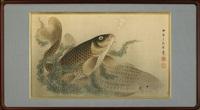 carps by settei tsukioka