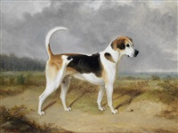 portrait of a foxhound with a hunt in the background by william webb