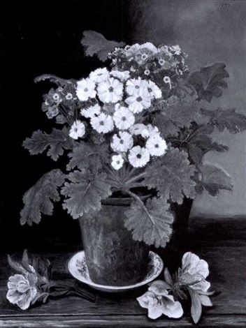 pot of primula by nellie s haines