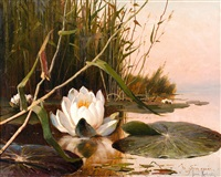 water lily by yuliy yulevich (julius) klever