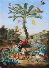 les oiseaux du paradis by flemish school (18)