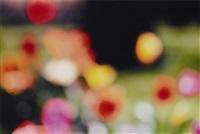 untitled (flowers) by piotr uklanski