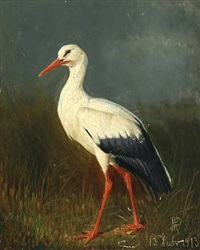 a young stork by niels peter rasmussen