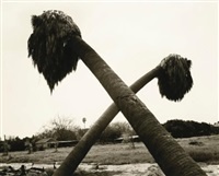 dead palms, partially uprooted, ontario, calif. by robert adams