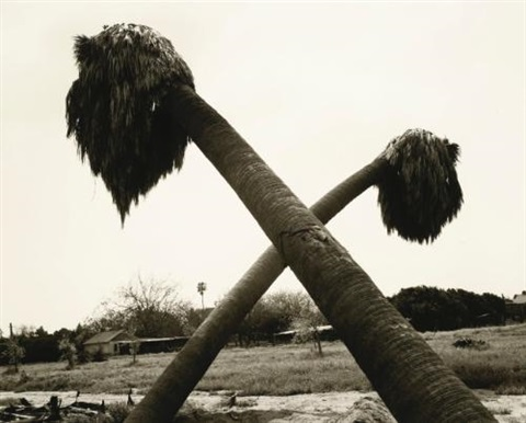 dead palms partially uprooted ontario calif by robert adams