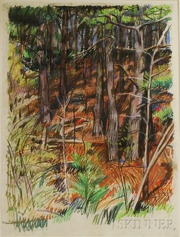 pine trees and pine needles by jon imber