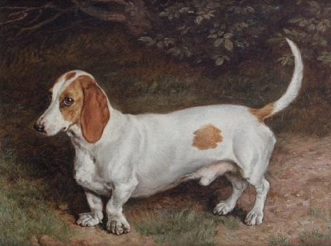 portrait of a basset hound by frank paton
