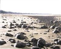 bois de plage by jean chouet