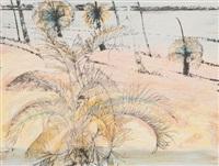 zamia by robert litchfield juniper