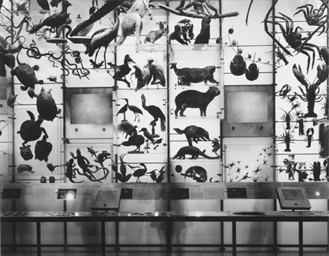 spectrum of life museum of natural history by matthew pillsbury