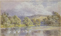 swans in a river landscape (+ another, smlr; 2 works) by martin snape