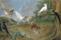 a landscape with a woodcock, partidge, bird of paradise and other birds by carl josef adolph