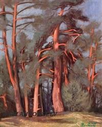 pine by peteris postazs