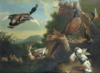 a pheasant, ducks, pigeons and other birds by a river by pieter casteels iii