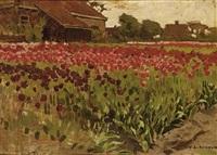 paarsche en roode darwin tulpen by antonie louis koster